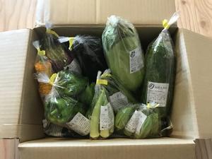 野菜天国さんの【農薬・肥料不使用】季節の旬野菜セット口コミ・レビュー2