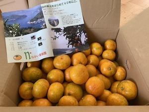 柑橘系男子さんの極早生みかん 栽培期間中農薬・化学肥料・除草剤不使用口コミ・レビュー1