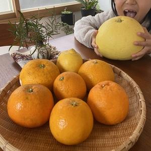 柑橘好きさんのなかい果樹園の柑橘詰め合わせセット口コミ・レビュー1