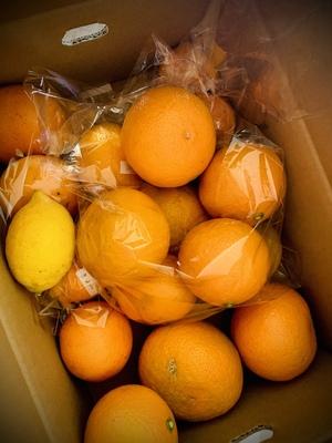 へちまの花さんのなかい果樹園の柑橘詰め合わせセット口コミ・レビュー1
