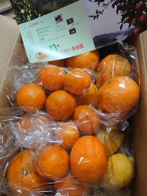 mokoさんのなかい果樹園の柑橘詰め合わせセット口コミ・レビュー1