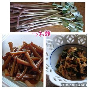 suzuさんの季節のおまかせ自然農野菜セット口コミ・レビュー1