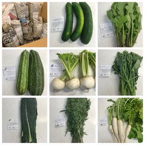 ポン太さんの【農薬・肥料不使用】季節の旬野菜セット口コミ・レビュー1