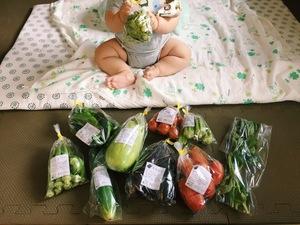 こっさんさんの【農薬・肥料不使用】季節の旬野菜セット口コミ・レビュー4