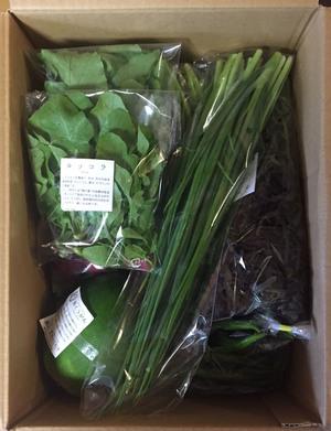 にゃー隊長さんの【農薬・肥料不使用】季節の旬野菜セット口コミ・レビュー1