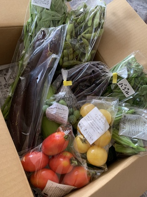 ぶぅさんの【農薬・肥料不使用】季節の旬野菜セット口コミ・レビュー1