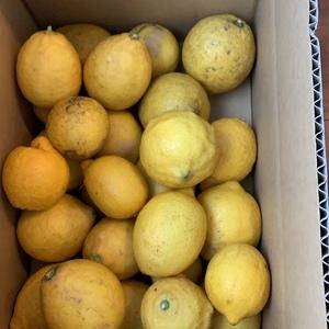 はなさんの広島産瀬戸内レモン  無農薬・無化学肥料 口コミ・レビュー2