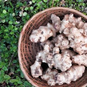 自然農 菊芋 (300g)