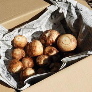 自然農 里芋 (1kg)