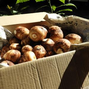 自然農 里芋 (5kg)