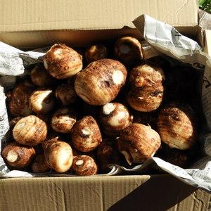 自然農 里芋 (3kg)