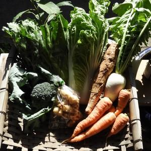 自然農 野菜セット (ベーシック)