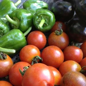 自然農 野菜セット (ミニ)