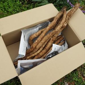 自然農 ごぼう (3kg)