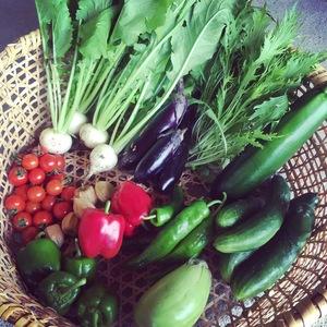 旬の野菜セット (Sセット 4〜5種類)