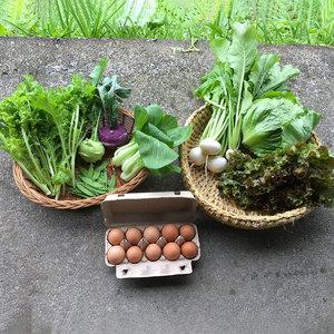 旬野菜と平飼い有精卵のセット (野菜4〜5種類と卵10個)