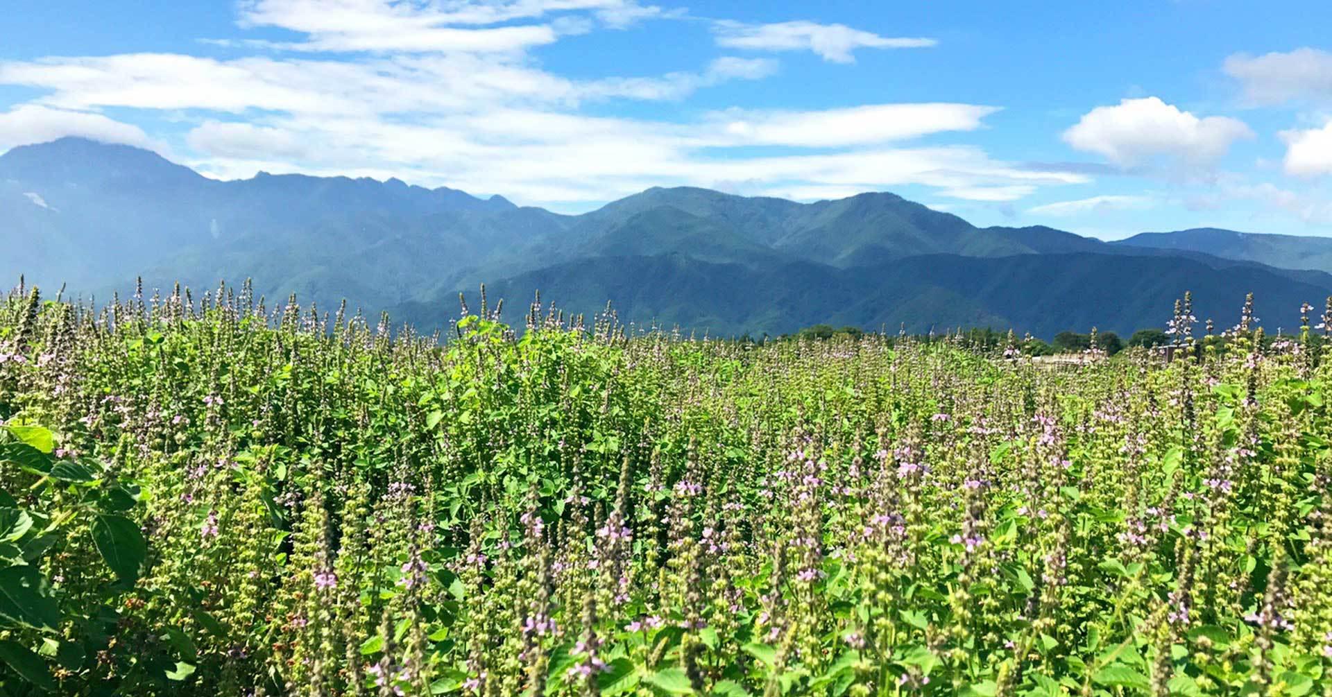 八ヶ岳 花笑み菜園メイン画像
