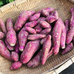 南阿蘇産 紅はるか (農薬・化学生成肥料・除草剤不使用栽培) (良品M  5kg)