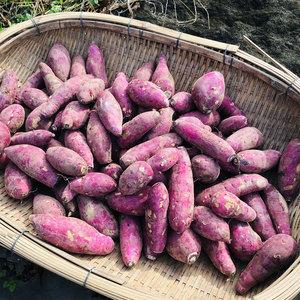 南阿蘇産 紅はるか (農薬・化学生成肥料・除草剤不使用栽培) (良品S 5kg)
