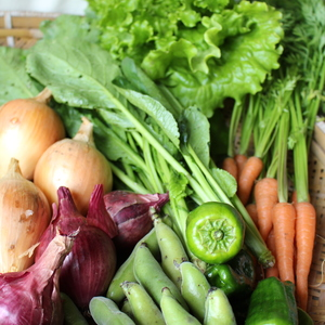 季節のおまかせ自然農野菜セット (S 4~5品)