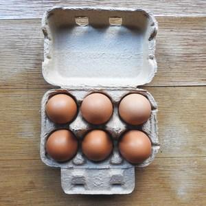 卵 [平飼い鶏・有精卵] (6個パック)