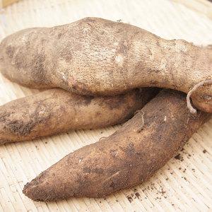 ヤーコン 無農薬・無化学肥料栽培 (1kg)