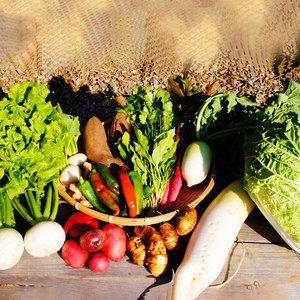 野菜セット  (おまかせ3品目)