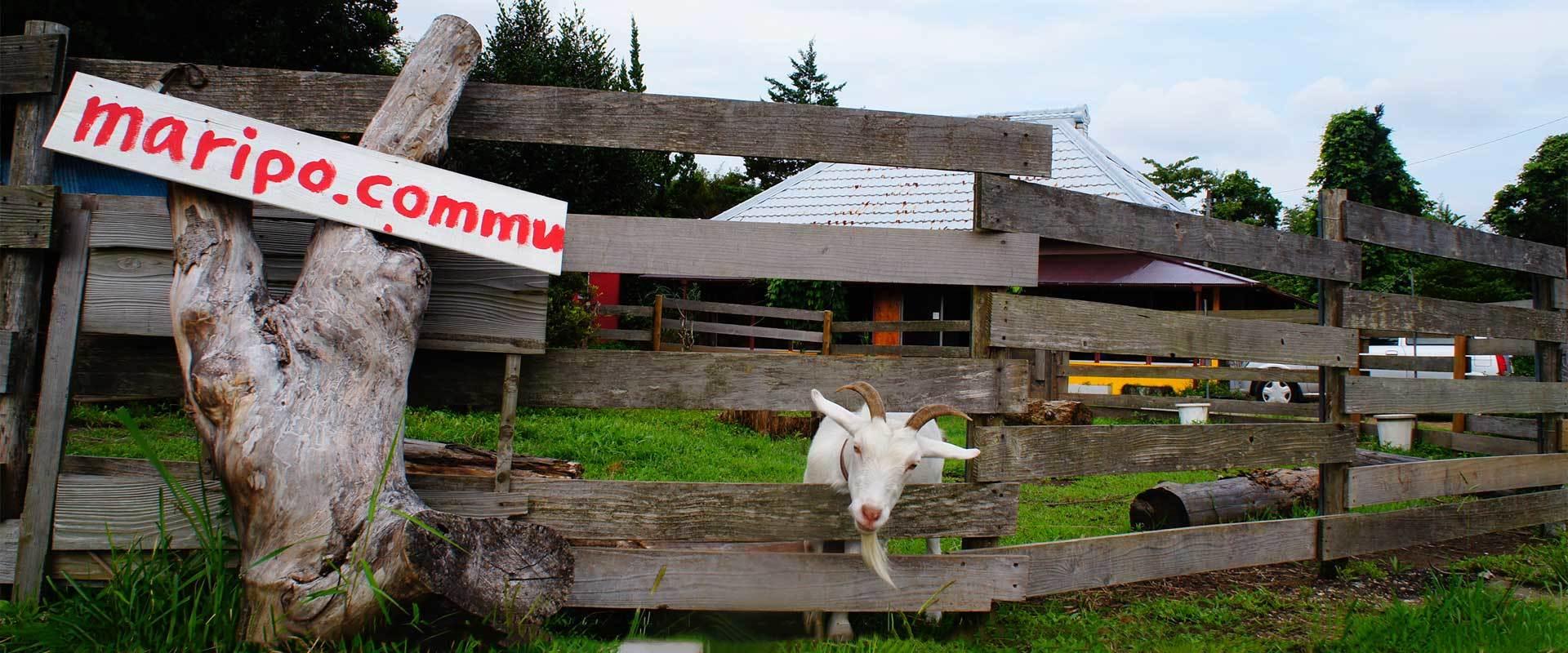 マリポ農園メイン画像