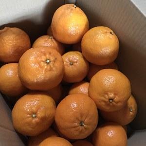 自然栽培 野菜とぽんかんのセット (野菜Mセットとぽんかん 5kg)