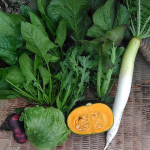 自然栽培 旬のお野菜セット (S: 5~7種類)