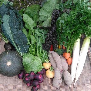 自然栽培 旬のお野菜セット (L: 9~11種類)