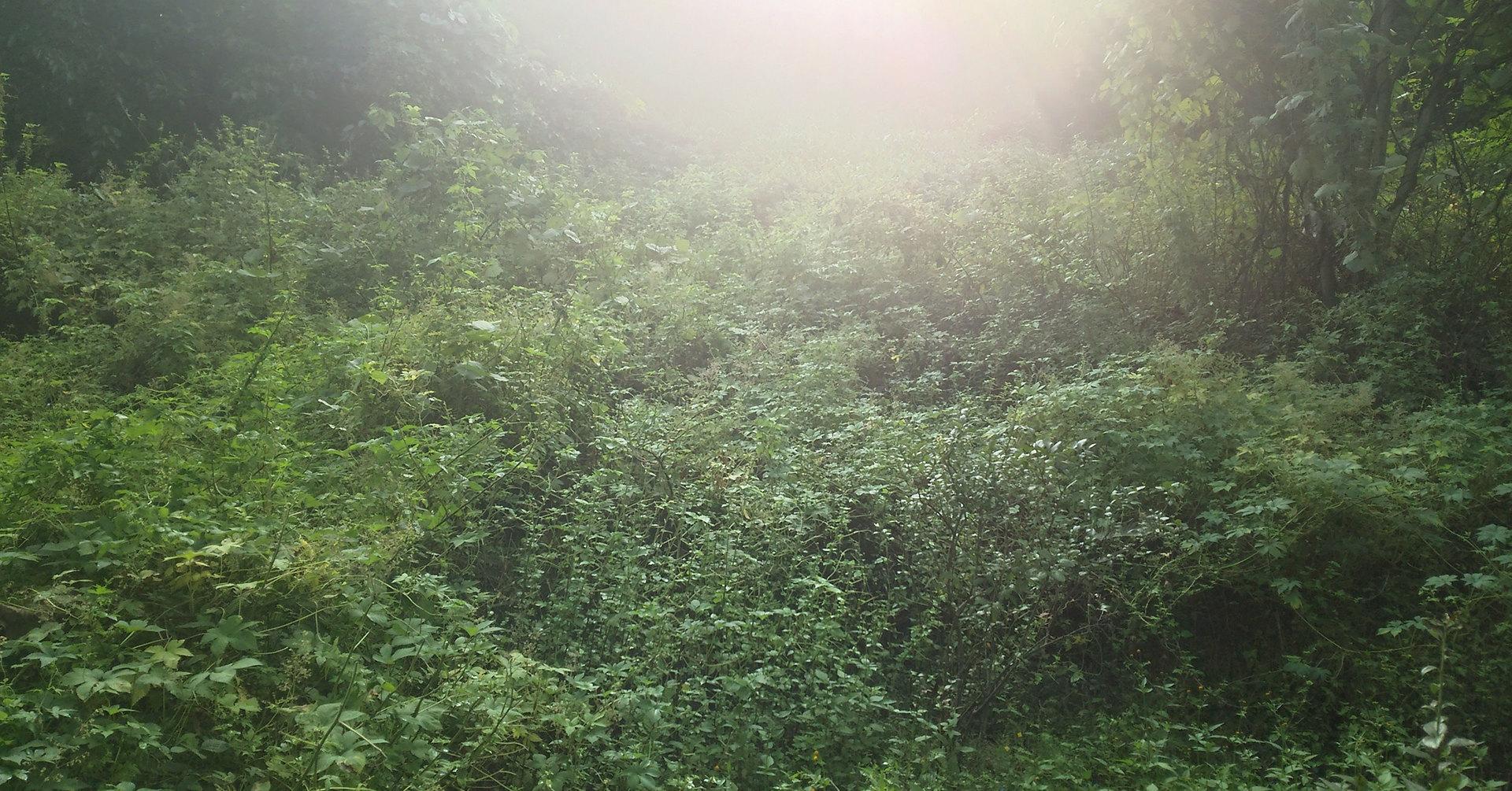 森の香メイン画像