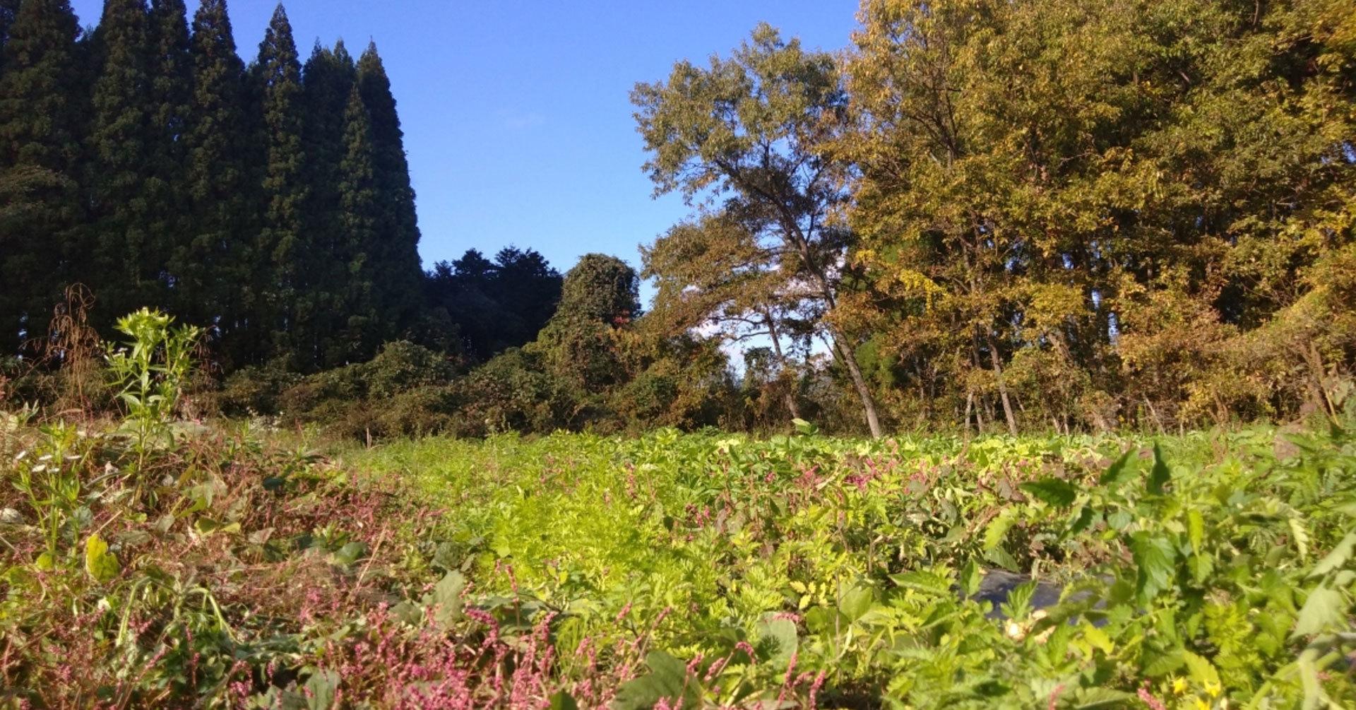 森の菜園メイン画像