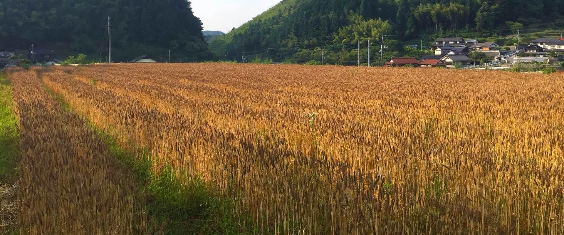 中浜農園メイン画像