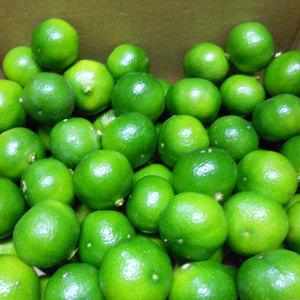 シークワーサー 無農薬・無化学肥料・無除草剤 (1kg)