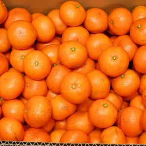 温州みかん 無農薬・無化学肥料・無除草剤 (Sサイズ 10kg(箱重量込み))