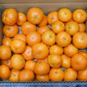 温州みかん 無農薬・無化学肥料・無除草剤 (MLサイズ混合 5kg(箱重量込み))