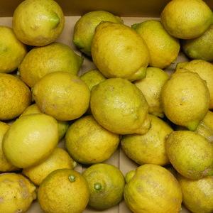 レモン 無農薬・無化学肥料・無除草剤 (B品 5kg(箱重量込み))