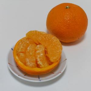 甘夏 無農薬・無化学肥料・無除草剤 (5kg)