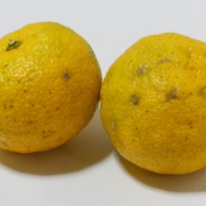 ゆず 無農薬・無化学肥料・無除草剤 (5kg(箱重量込み))