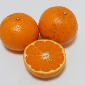 はるみ  無農薬・無化学肥料・無除草剤 (MLサイズ5kg)