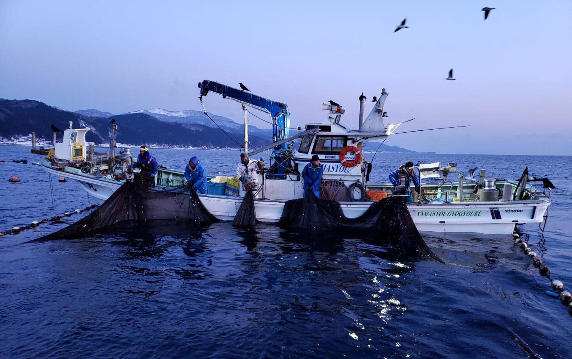 日本魚類メイン画像