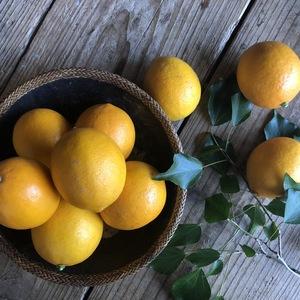 フルーティーな香りと味わい!マイヤーレモン1kg