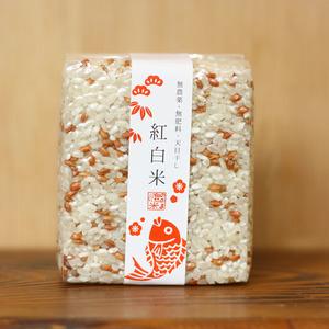 紅白祝い米【安心・安全を贈り物に 無農薬・無肥料・天日干し】 (白帯、2合)