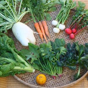 【無農薬・無肥料】生命力あふれる旬野菜セット (Sセット 7〜10種類)