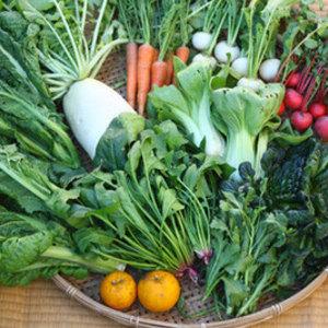 【無農薬・無肥料】生命力あふれる旬野菜セット (Lセット 8〜12種類)