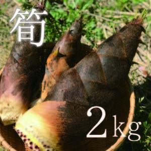 【4月限定!】孟宗竹たけのこ (2kg)
