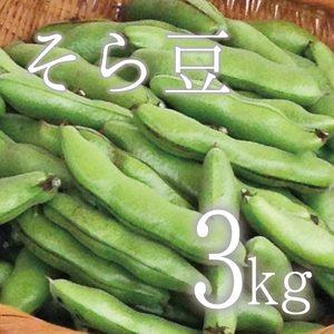 【5月限定!旬の味!無農薬・無肥料】そら豆 (3kg  さや付)
