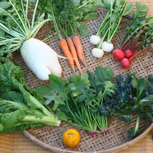 【無農薬・無肥料】生命力あふれる旬野菜セット (Sセット 7〜10種類 ※レビュー投稿で半額)