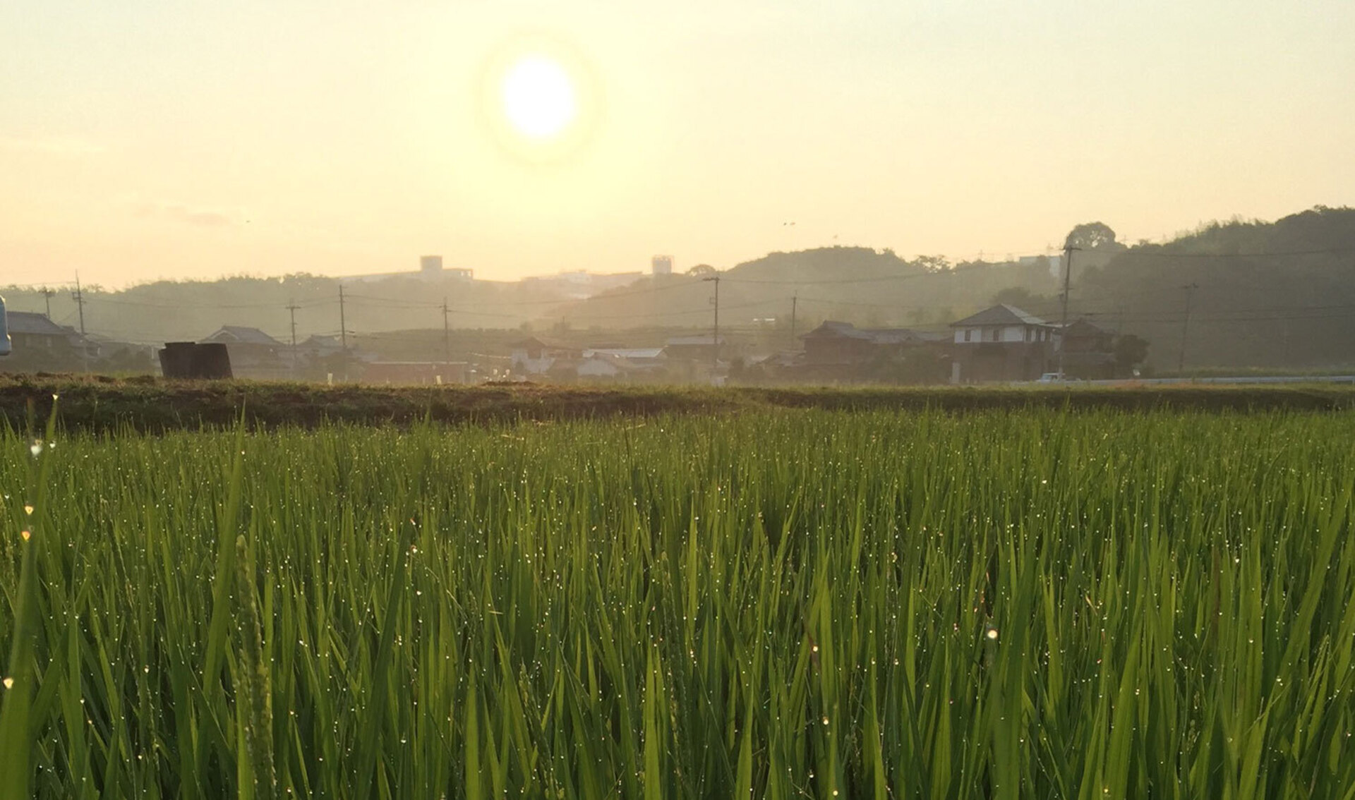 農業!たいこやメイン画像